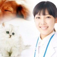 動物看護師